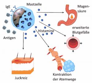 Zu viel Histamin kann bei Histaminintoleranz Allergien auslösen.