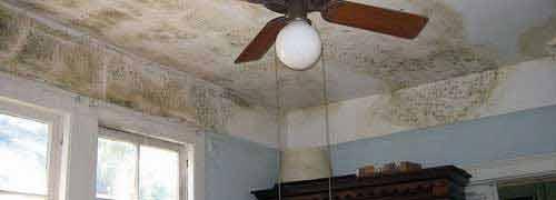 Schimmelpilz-Befall in Wohnräumen gefährdet die Gesundheit.