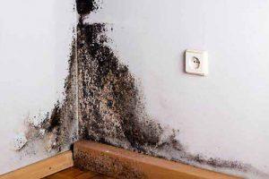 Schimmelpilz-Befall in Wohnräumen ist gesundheitsschädlich.