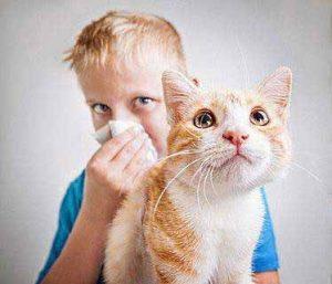 Wer eine Katzenallergie hat, verliert oft den Spaß an seinem Stubentiger.