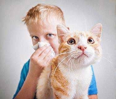 Katzenalergie