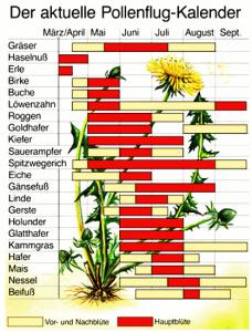 Wann welche Blüten- und Gräserpollen in der Luft sind, zeigt der Pollenflug-Kalender.
