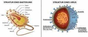 Bakterien und Viren unterscheiden sich.