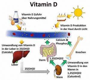 Vitamin-D-Mangel beeinflusst die Vitamin D Synthese.