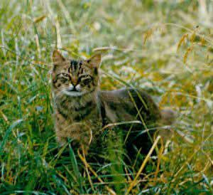 Auch Katzen können sich mit Borreliose infizieren.