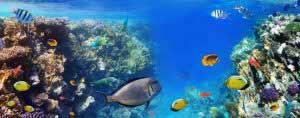 Phosphat ist für ein üppiges Pflanzenwachstum im Aquarium unerlässlich.