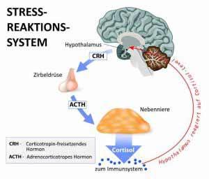 Stressmanagement hilft, den Cortisolspiegel auszugleichen.