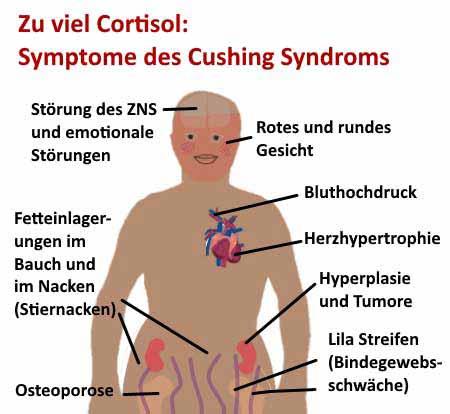 Cortisol - das Stresshormon   Heimtest-Schnelltests.deHeimtest ...