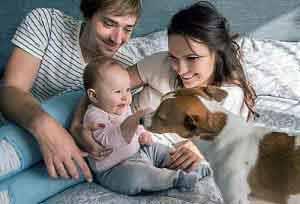 Wer einen Hund kaufen möchte, bekommt Hilfe bei der Auswahl durch einen Hunde DNA Test.