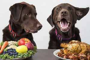 Eine gesunde, den genetischen Eigenschaften und Bedürfnissen des Hundes angepasste Ernährung beugt Krankheiten vor.