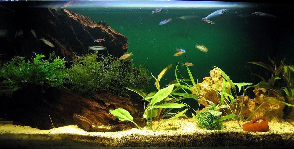 welcher ph wert im aquarium ist optimal heimtest. Black Bedroom Furniture Sets. Home Design Ideas