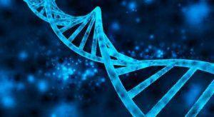 Genetische Faktoren werden für Kryptopyrrolurie verantwortlich gemacht.