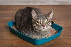 Wenn die Katze gar nicht mehr vom Katzenklo herunterkommt, kann das auf eine Blasenentzündung hindeuten.