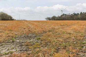 Auf einem mit Glyphosat behandelten Feld wächst nicht mehr viel.