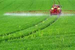 Auf Feldern großflächig ausgebracht, gelangt Glyphosat in die Nahrungskette.